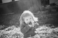 IMG_5226bw (eingefangen) Tags: blackandwhite bw chickens easter toddler chicks
