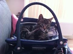 What's in my bag? (Celesta ) Tags: cats cute cat kitten katten kat kittens cooper bailey