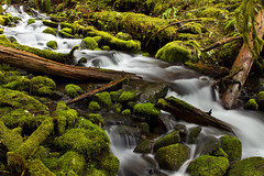 Within Mossy Borders (PatT&5) Tags: creek forest flow washington moss pacificnorthwest solduc olympicmountains