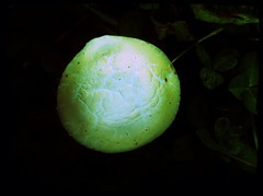 Pilz // Mushroom