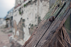 DEBRIS  (7)  -  SPLINTERED A-PEEL (DESPITE STRAIGHT LINES) Tags: morning beach broken wall sunrise coast wooden am sand nikon ruins peeling paint stonework debris ruin rye coastline walls eastsussex rundown ruined splinters crumbled splintered delapidated rotted woode degradation cambersandsbeach d700 nikon2470mm nikond700 cambercambersands ilobsterit