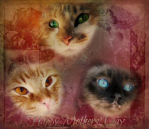 cats card happymothersday rumtumtugger missstevie misstruffles picmonkey