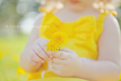 Honey of a Day... (Kimberly Chorney) Tags: baby sunlight yellow hands naturallight littlegirl dandelions yellowdress creamybokeh