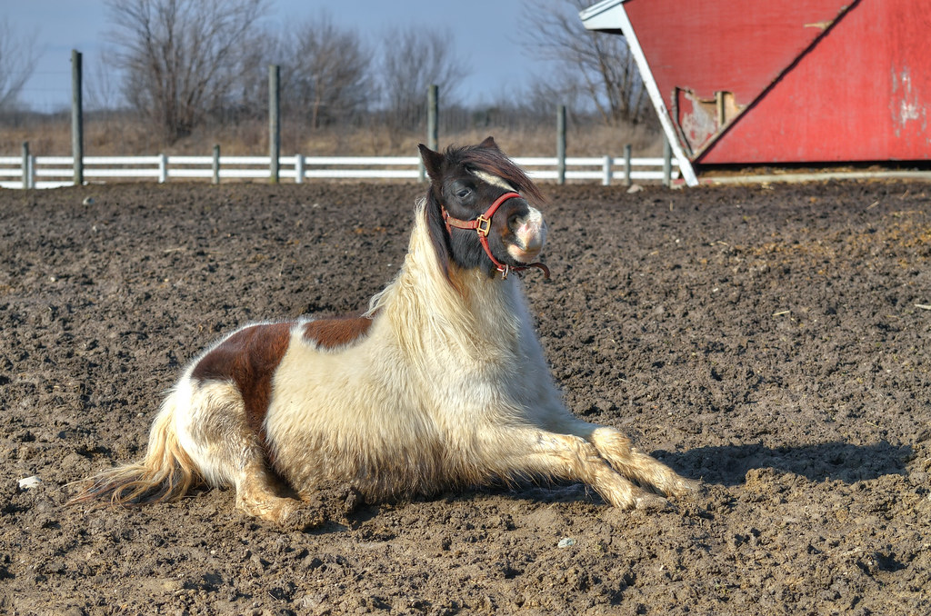 Cute horse lying on the ground / 可愛的馬