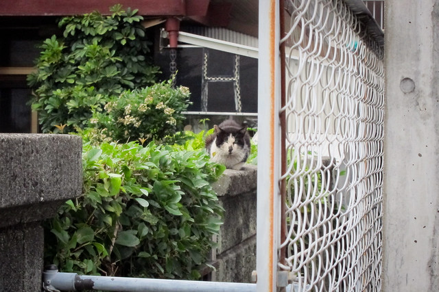 Today's Cat@2012-05-25