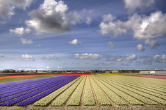 """Flowerfields • <a style=""""font-size:0.8em;"""" href=""""http://www.flickr.com/photos/45090765@N05/7309352404/"""" target=""""_blank"""">View on Flickr</a>"""