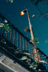 Lampalenvers 1 (stephaneberla) Tags: light water lamp puddle eau reflet reflect lumiere floorlamp lampadaire flaquedeau