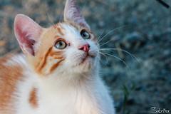 Kitty! (Sabrina ) Tags: animal cat kitten kitty kitties felino gatto gatti animale micio gattonero gattorosso micino