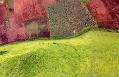 Pastures of war (Image Journeys) Tags: africa green nature rwanda congo terminator cndp m23 easterncongo boscontaganda