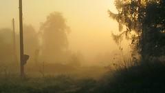 Misty morning (mih.mih4) Tags: morning light sun mist nature fog sunrise canon landscape dawn countryside spring village