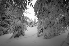 snowfilled. (jrseikaly) Tags: winter lebanon white snow tree nature forest jack photography high dynamic filled covered cedar range hdr cedars seikaly jrseikaly