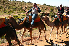KS4A5278 (Actuality_Media) Tags: morocco maroc camels excursion studyabroad actualitymedia documentaryoutreach filmabroad
