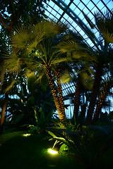 The Palm Greenhouse (larry_antwerp) Tags: brussels belgium belgië brussel 比利時 laken royalgarden ベルギー брюссель 比利时 布鲁塞尔 بلجيكا בלגיה бельгия بروكسل koninklijkeserre 벨기에 بلژیک बेल्जियम ブリュッセル市