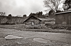 Drugstore Perfume (drei88) Tags: barn rural raw rainyday dismal cloudy clarity windy dreary stormy landmark vision seeing purpose decline wandering forlorn searching gravelroad chasingballoons