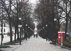 Karl Johans Gate (Neus Martnez) Tags: street city trees naturaleza tree nature oslo norway landscape gate karl noruega johans