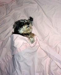 mother's day 2016 on galveston island,   my mom's dog  christy  5-16 (nolehace) Tags: sanfrancisco dog galveston animal christy island spring day texas tx mothers tejas 2016 516 nolehace fz35