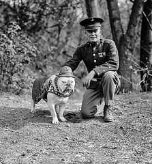 "Chesty Puller and the first Marine Corps Mascot ""Sgt. Jiggs"" 1926. (Peer Into The Past) Tags: blackandwhite history usmc vintage photography military marines marinecorps semperfi 1926 chestypuller marinemascot sgtjiggs peerintothepast"