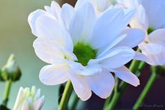 IMG_3791 (nelson_tamayo59) Tags: flores jardin canarias tenerife