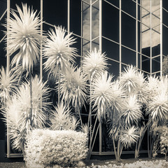 north-melbourne-1792-ps-w (pw-pix) Tags: sky blackandwhite bw plants sun white black building glass architecture modern clouds reflections garden ir grid spiky shiny angles australia melbourne victoria infrared reflective shrub aluminium rectangles northmelbourne triffids innersuburbs blackwoodstreet