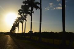 Along the road, Guatemala (@qatusachmelova) Tags: guatemala palmtrees palmeras porlacarretera sunsetting