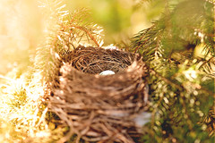 birds nest- Happy Easter (mariosworld343) Tags: blue light nature birds easter outdoors nikon nest 14 egg 85mm sigma fx d700