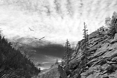 Easter in the Canyon (Lauren Isabel) Tags: sky blackandwhite monochrome clouds river easter landscape geese nikon colorado canyon d300 pikenationalforest southplatte southplatteriver elevenmilecanyon elevenmile 1685mm
