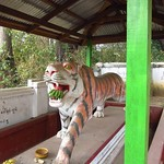 "Tiger Loves Bananas <a style=""margin-left:10px; font-size:0.8em;"" href=""http://www.flickr.com/photos/14315427@N00/6924331862/"" target=""_blank"">@flickr</a>"