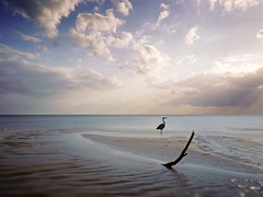 Waiting For Dinner (parkerbernd) Tags: ocean life light sea wild usa sun seascape beach heron gulfofmexico water clouds river golf mexico lumix grey gulf florida fort horizon shoreline estuary rays horizont mexiko myers reiher graureiher gx1