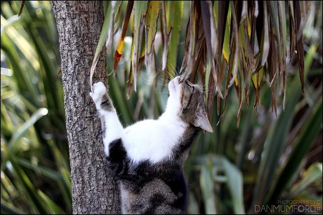 Rocky, climbing up a tree...