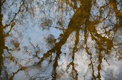 Nationalpark Donau-Auen ;) (anuwintschalek) Tags: reflection water austria march nationalpark spring wasser spiegelung niederösterreich vesi 2012 frühling schlossinsel kevad orth schlossorth altwasser donauauen peegeldus nationalparkdonauauen nationalparkzentrum rahvuspark d7k nebenarm nikond7000 sigma1770os kõrvalharu