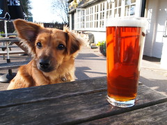 Marley says 'Drink real ale' (CBG1970) Tags: dog chien sun beer pub ale hund bier biere chalton fancott fancottarms