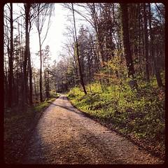 Noch so ein Waldweg