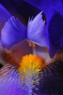 Iris Interior