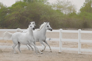 من مسابقه بيت العرب الخامسه ٢٠١٢