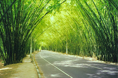 Bamboo Tunnel, Brazil (elpedalero) Tags: travel viaje brazil green latinamerica americalatina bicycle america landscape geotagged cycling interesting map tunnel streetscene bamboo submarine exotic bahia latin latinoamerica tropical viagem environment geotag recent bicycletouring bambu biketour submarino adventurecycling iberoamerica elsubmarino landscapetropical elpedalero pedalero