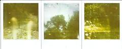 El camino al jardn secreto. (Daniel Pea) Tags: camera flowers film garden landscape mexico polaroid sx70 600 expired