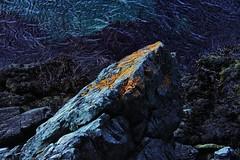 (Explore + Explore Front Page) Lichen, Burnt Head, Newfoundland (Kenneth (over 1,000,000 views)) Tags: ocean blue sea orange canada yellow newfoundland interestingness atlantic explore lichen 13 i500 kennethjharvey mygearandme ringexcellence