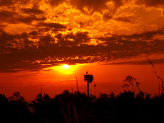 CIMG0747 sunset stork nest (pinktigger) Tags: sunset italy nature countryside italia nest country storks friuli fagagna cicogna oasideiquadris feagne