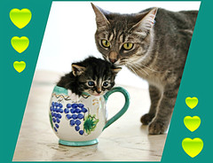 Micky & kitty  (Viola & Cats =^..^=) Tags: cats animals kittens kitties felini felines gatti animali gattini catnipaddicts