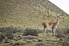 Torres De Paine (Avi Morag) Tags: torresdelpaine ch paine 241054l eos7d avimorag