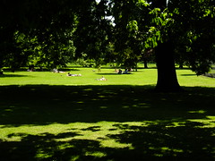An English Summer Day (J Mark Dodds [a shadow of my future self]) Tags: park trees england urban leaves recreation relaxation dappled sunbathers lambeth walkingthedog englishsummer camberwelllondonse5 shadeandlight firstrays daysinmay jmarkdodds dscf7310 ruskinparkinthesun