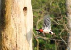 leaving nest (rowanlea51) Tags: