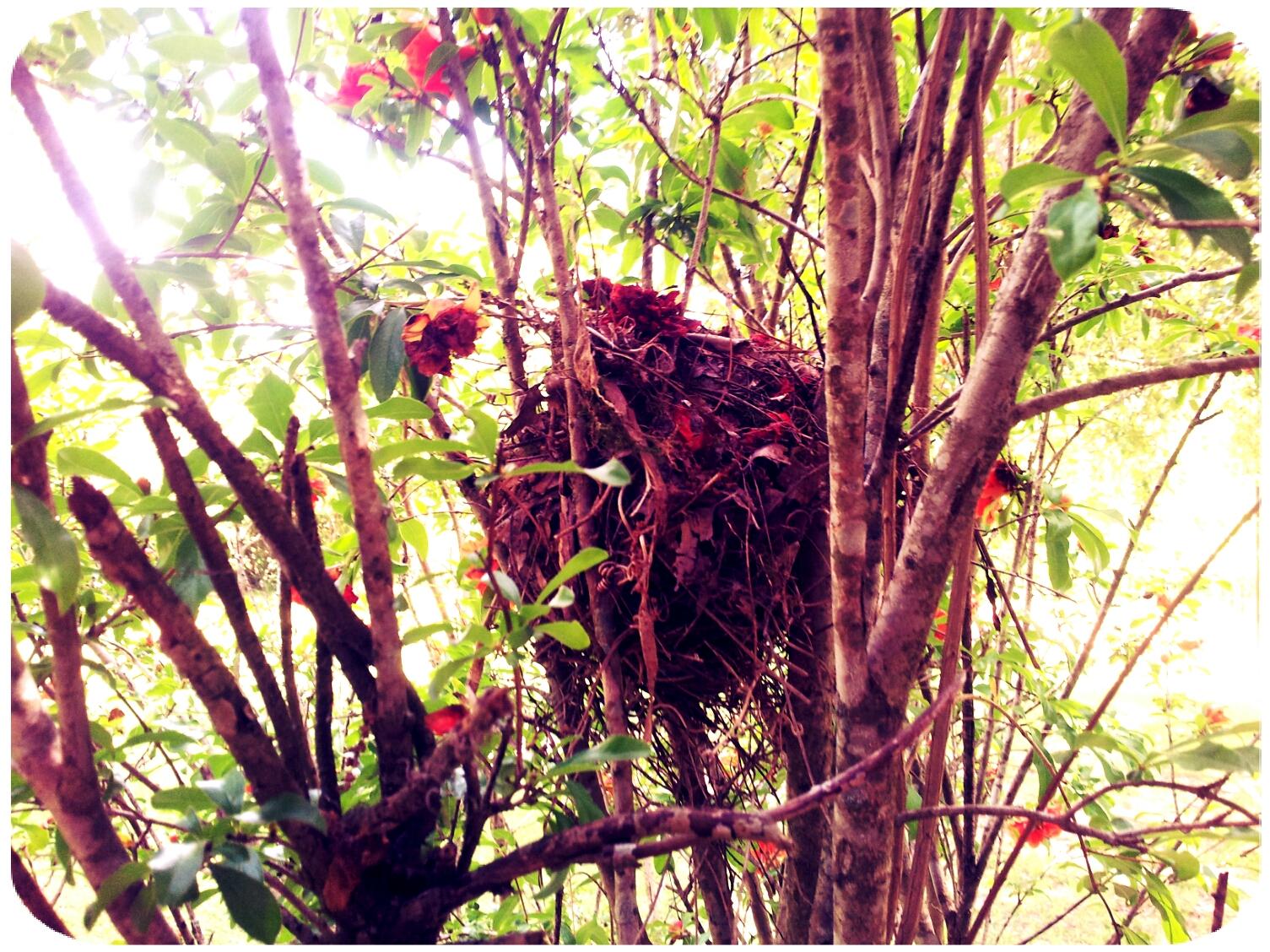 2012-04-25 15.07.47_Anne_Round.jpg