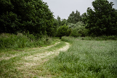 Emsland (jpk.) Tags: 2012 canoneos7d juni kamera kanutour unterwegs feldweg efs281755mm ©janphilipkopka