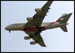 EMIRATES AIRBUS A380 (ESOX LUCIUS) Tags: holland plane emirates taco airbus a380 schiphol airbusa380