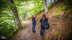 Hiking (Ukelens) Tags: trees light shadow tree nature forest lights schweiz switzerland licht shadows swiss natur ivy bern lightshow wald bume baum forests moos lighteffects lichter lightroom lighteffect sigriswil oberland efeu lig lichteffekte lichteffekt wlder ukelens