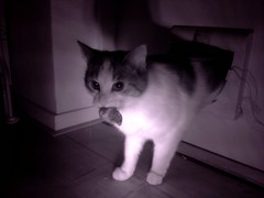 20160522-012721-i-1 (Catflap central) Tags: cat catdoor katzenklappe raspberry pi camera cats catflap kattenluik catflapj2nnl pet meow