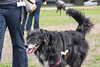 16-05-15_untitled_072 (Daniel.Lange) Tags: dog philadelphia dogs dogdayafternoon spado columbussquarepark