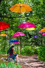 #8 Raining Umbrellas! (xTexAnne) Tags: trees umbrella bench utah saltlake rainwear tulipfestival nikond7100 diannewhite 116picturesin2016