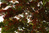 FLAMBY (karlos_radikal) Tags: flowers trees nature plantas flamboyan
